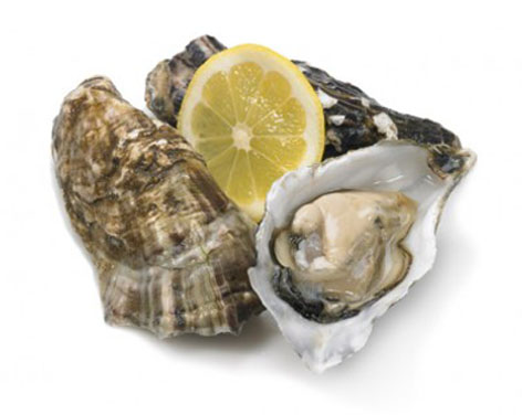 oyster4